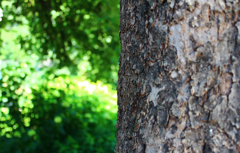 Photo wallpaper greens, summer, macro, nature, tree, bark