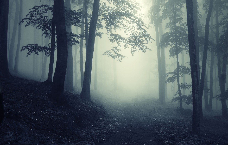 Brumas de Baróvia - Página 2 Forest-dark-creepy-night