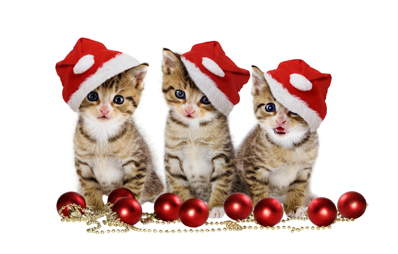 Wallpaper Christmas Magic Balls Hat Kitten Eyes Cat