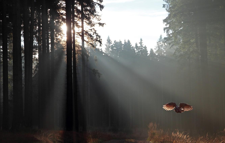 Photo wallpaper autumn, forest, grass, the sun, rays, nature, owl