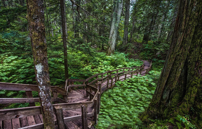 Photo wallpaper road, forest, trees, rasteniya