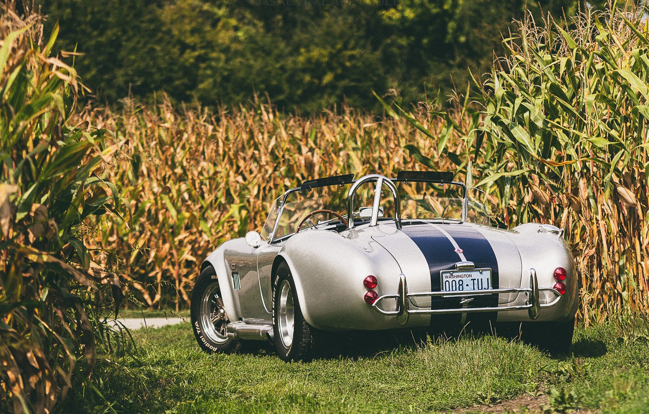 Photo wallpaper field, Shelby, corn, wheel, back, Cobra, farm, fields of corn
