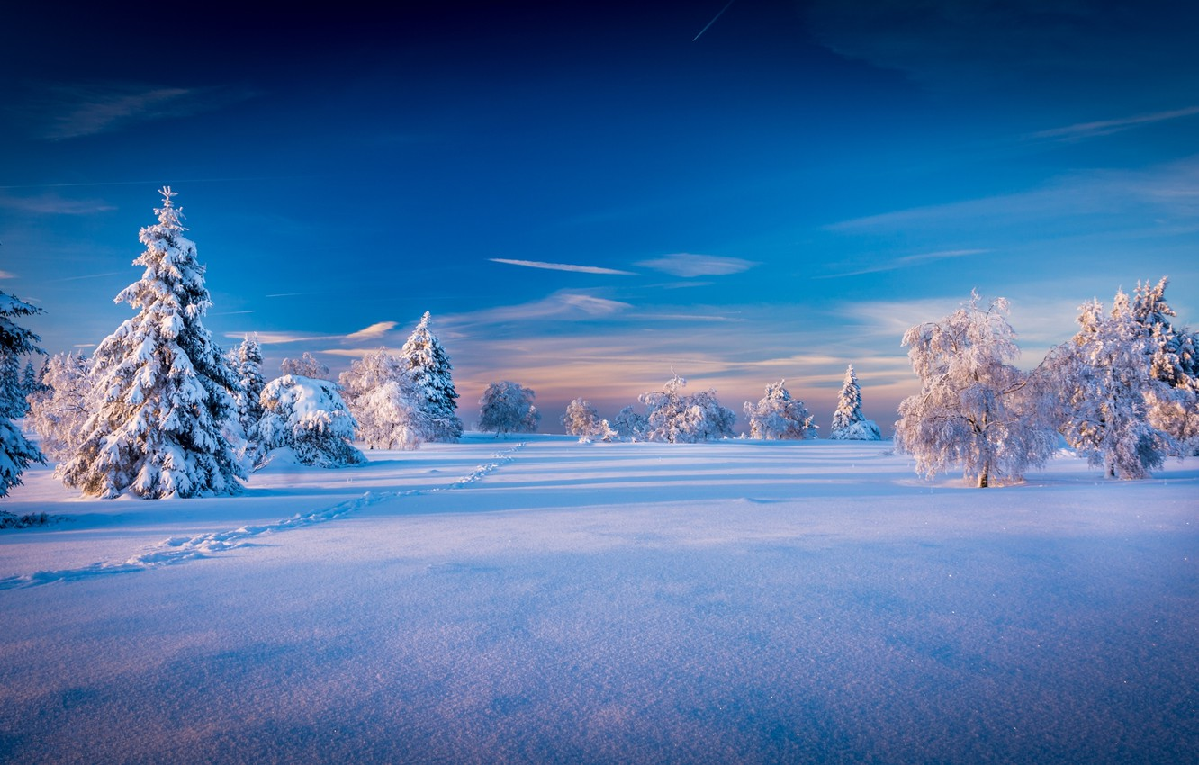 Photo wallpaper The sky, Nature, Winter, Trees, Snow, Spruce, Landscape