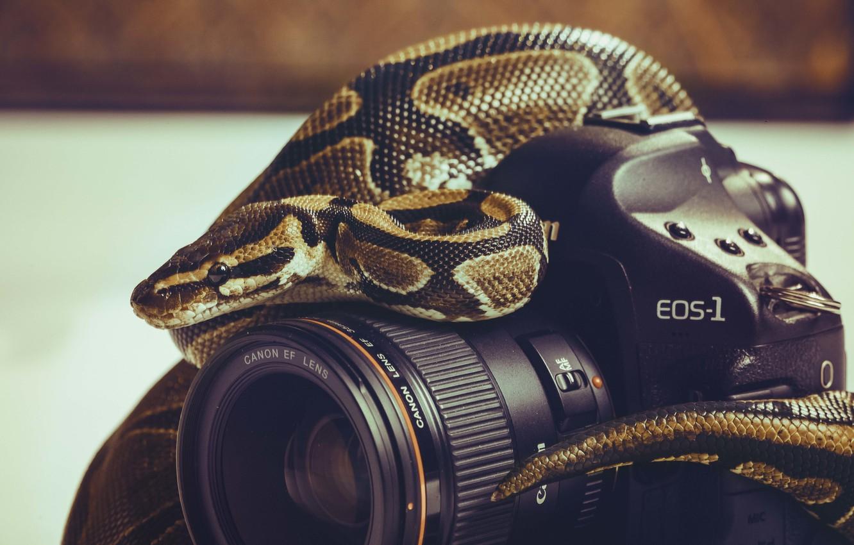 Photo wallpaper snake, the camera, lens