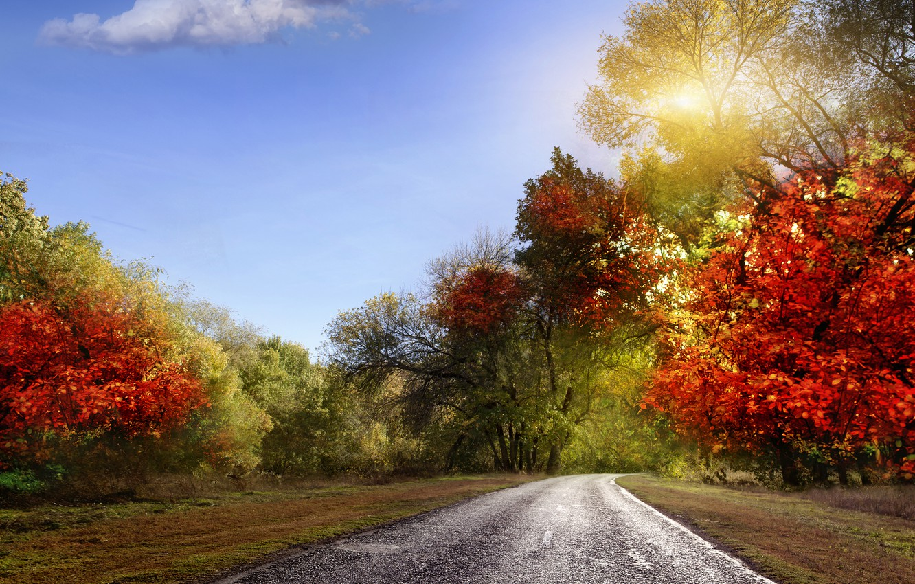 Photo wallpaper road, autumn, the sky, leaves, rays, landscape, nature, colorful