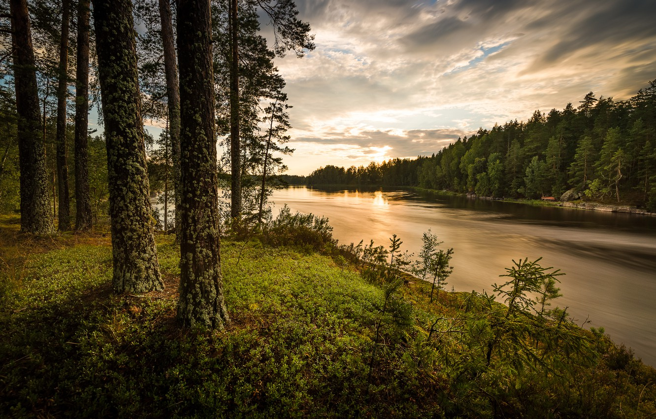 Photo wallpaper forest, river, the evening