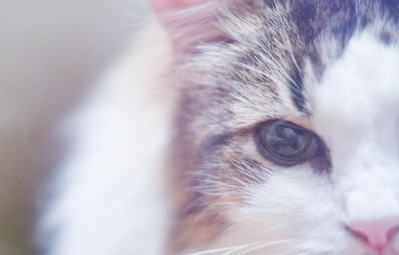 Photo wallpaper cat, cat, macro, eyes, wool, nose