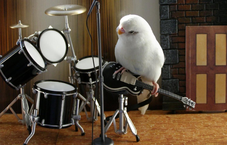Photo wallpaper music, white, animals, bird, parrot, band, nice