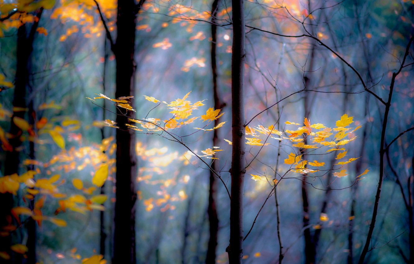 Photo wallpaper forest, leaves, trees, branches, yellow, autumn