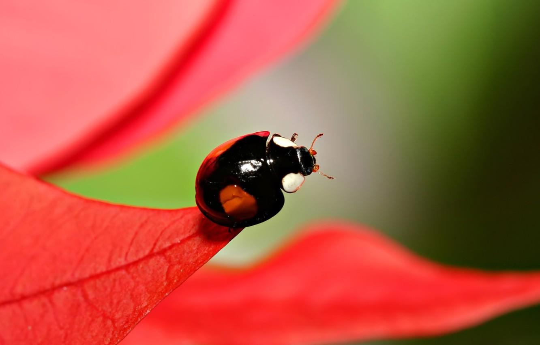 Photo wallpaper foliage, ladybug, blur