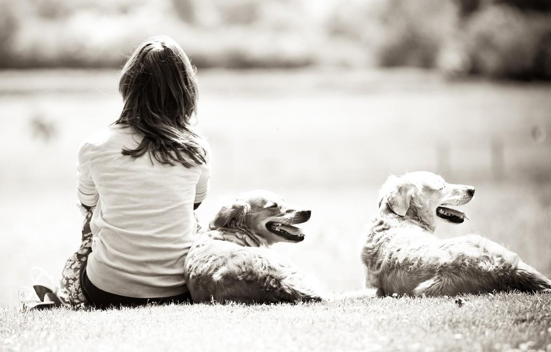 Photo wallpaper dogs, grass, girl, nature, background, girls, black and white, mood, Wallpaper, dog, dal, brunette, girl, …