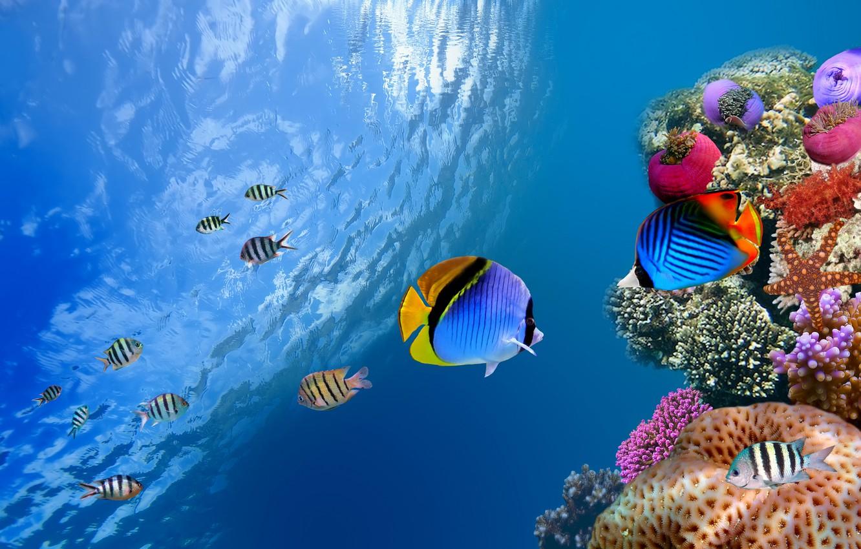 Photo wallpaper sea, the ocean, fish, underwater, sea, ocean, fish, coral, od water, coral
