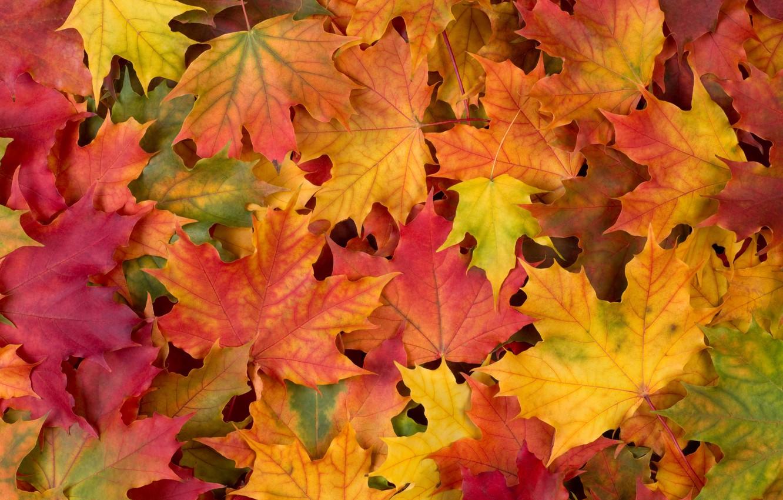 Photo wallpaper autumn, leaves, autumn leaves