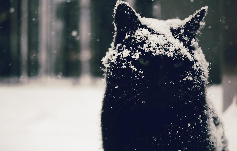 Photo wallpaper eyes, cat, look, snow, background, Kote, Moody