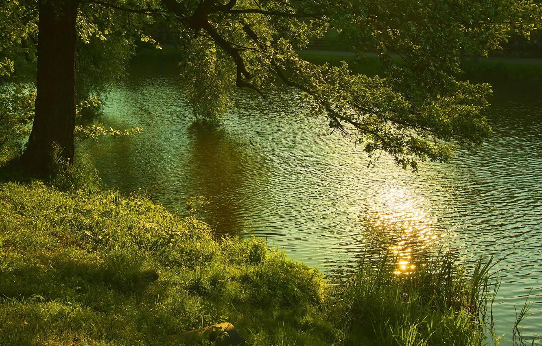 Photo wallpaper nature, river, tree