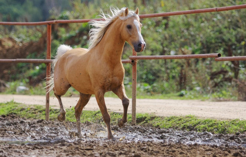 Photo wallpaper horse, dirt, red, bokeh
