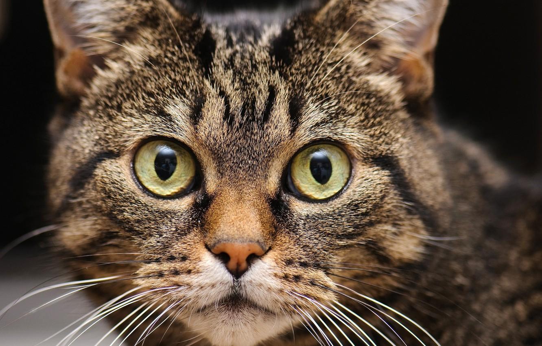 Photo wallpaper cat, eyes, cat, mustache, look, face