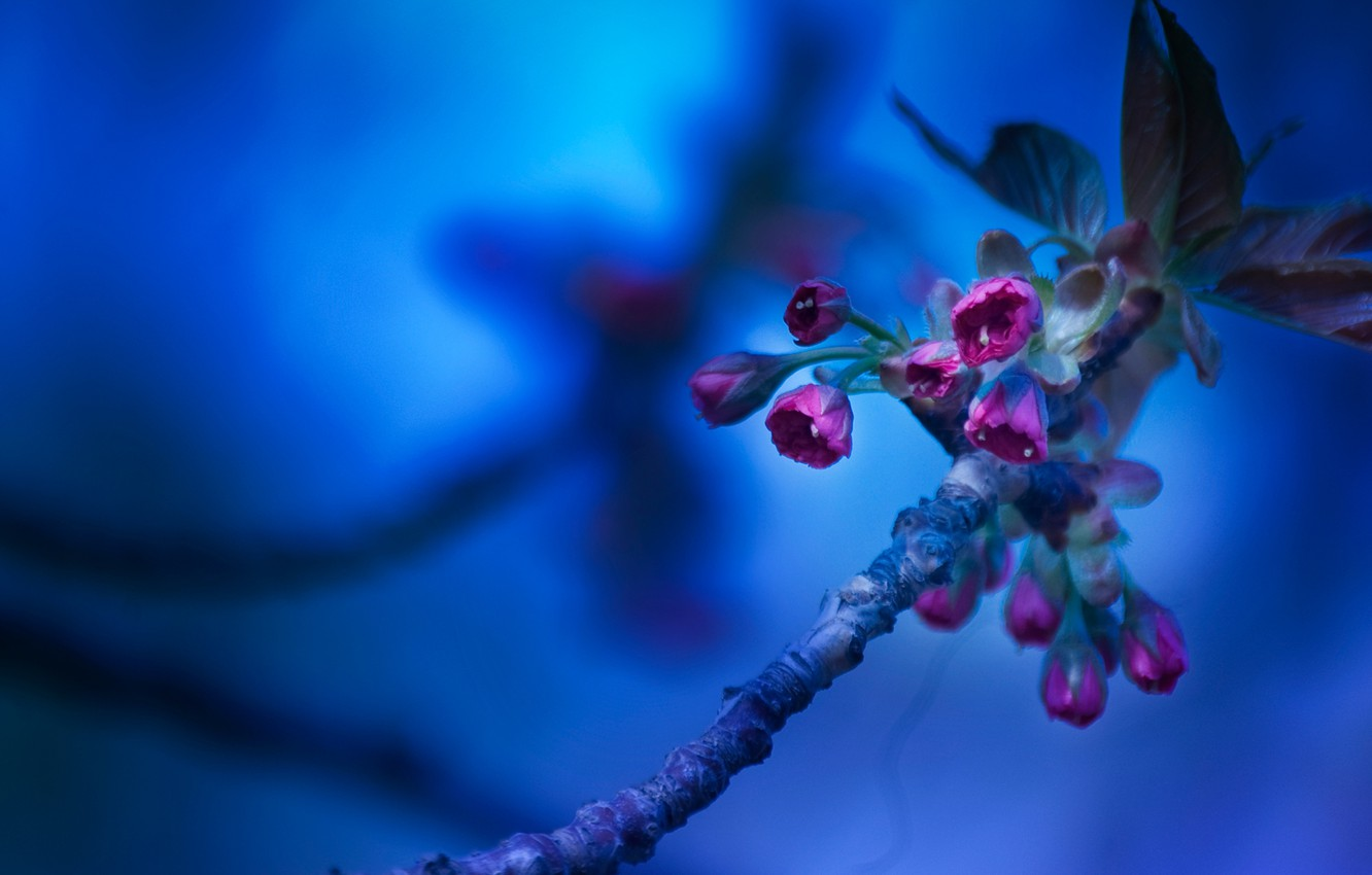 Photo wallpaper macro, flowers, background, branch, sini