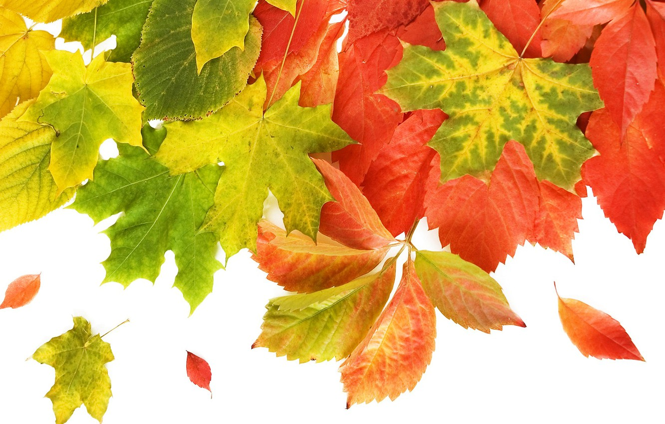 Photo wallpaper autumn, leaves, macro, collage, postcard