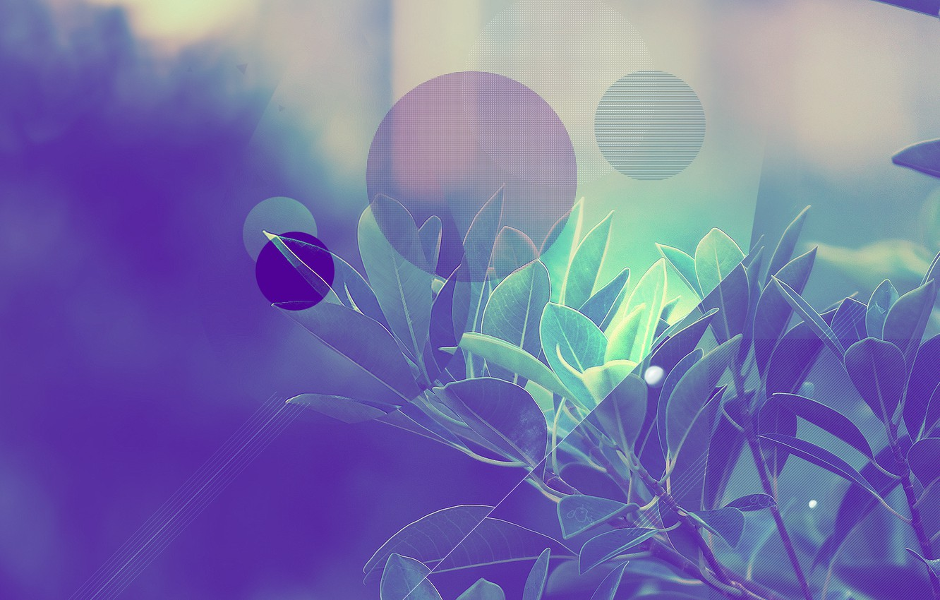 Photo wallpaper leaves, trees, circles, strip, Abstraction