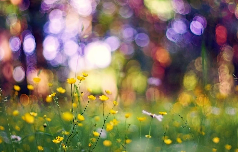 Photo wallpaper grass, macro, flowers, glare, yellow, bokeh