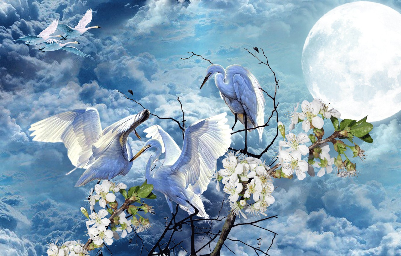 Photo wallpaper the sky, flowers, the moon, Spring, swans, storks