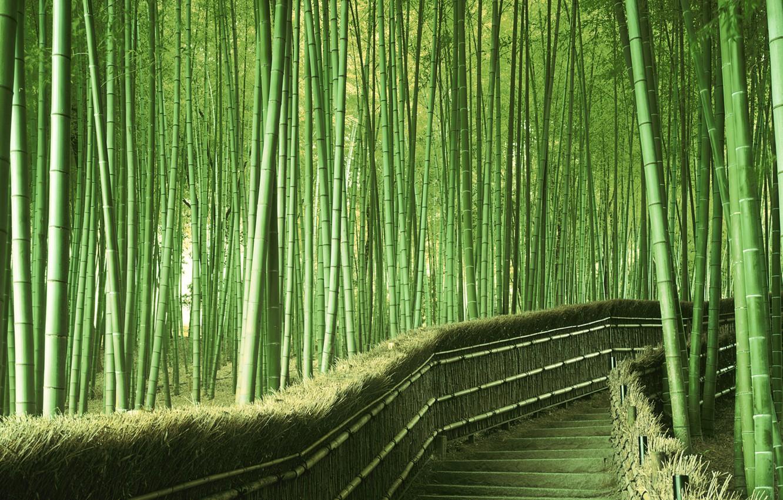 Photo wallpaper greens, bamboo, Japan