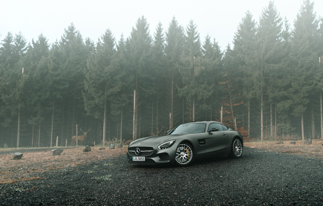 Photo wallpaper Mercedes-Benz, Front, AMG, Grey, Supercars, Forest, GT S