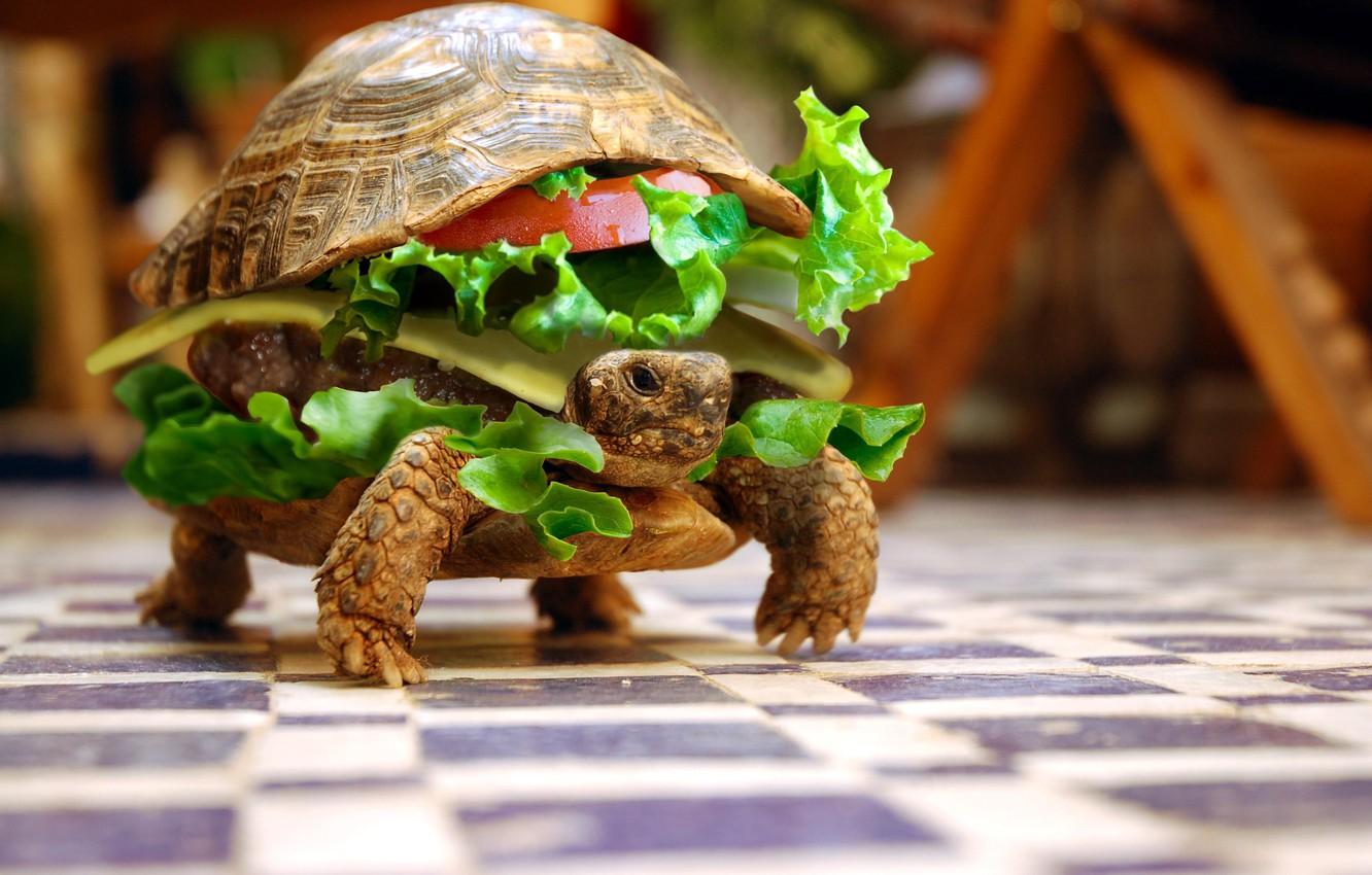 Photo wallpaper animals, turtle, humor, sandwich, vegetables