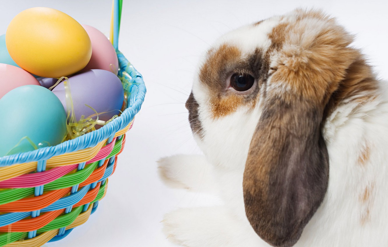 Photo wallpaper rabbit, Easter, basket with eggs