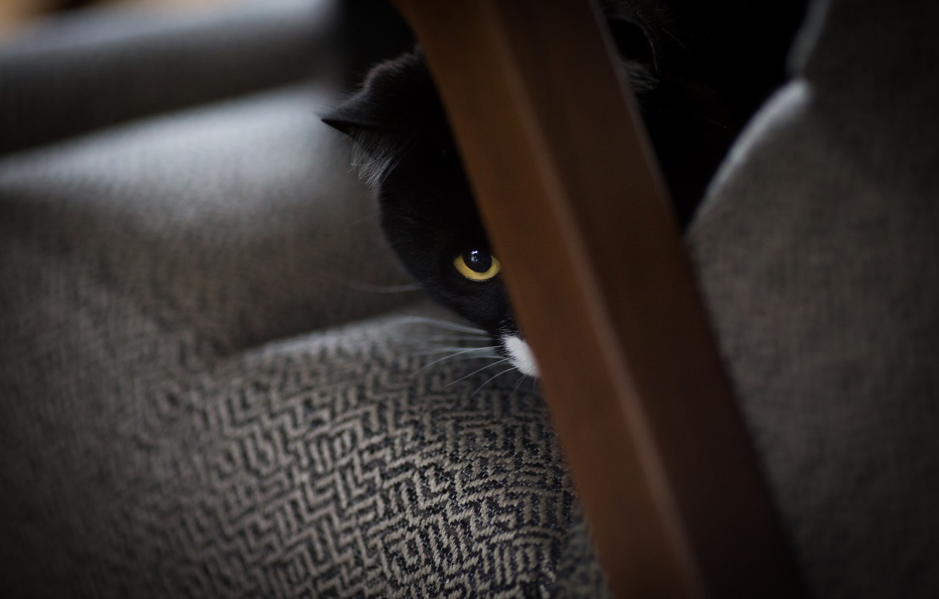 Photo wallpaper cat, eyes, black and white