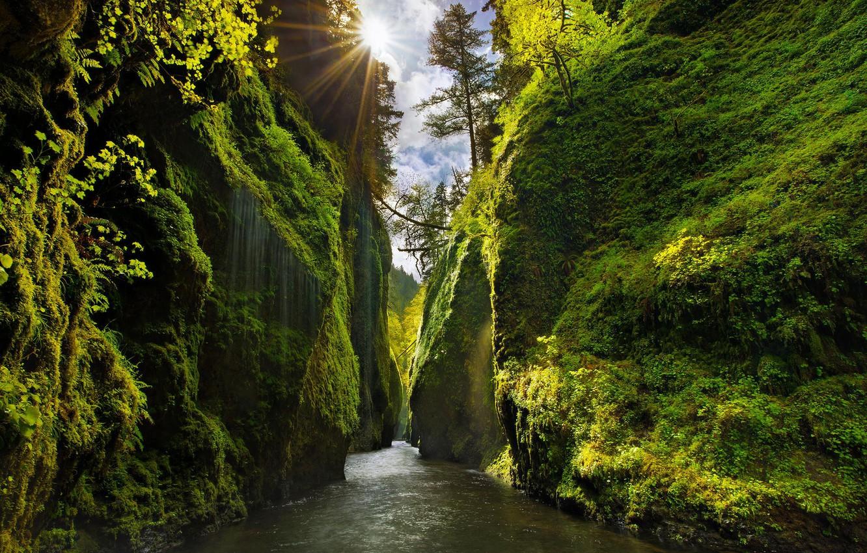 Photo wallpaper greens, the sky, rays, light, trees, river, rocks, the slopes, moss, Oregon, canyon, USA, the …
