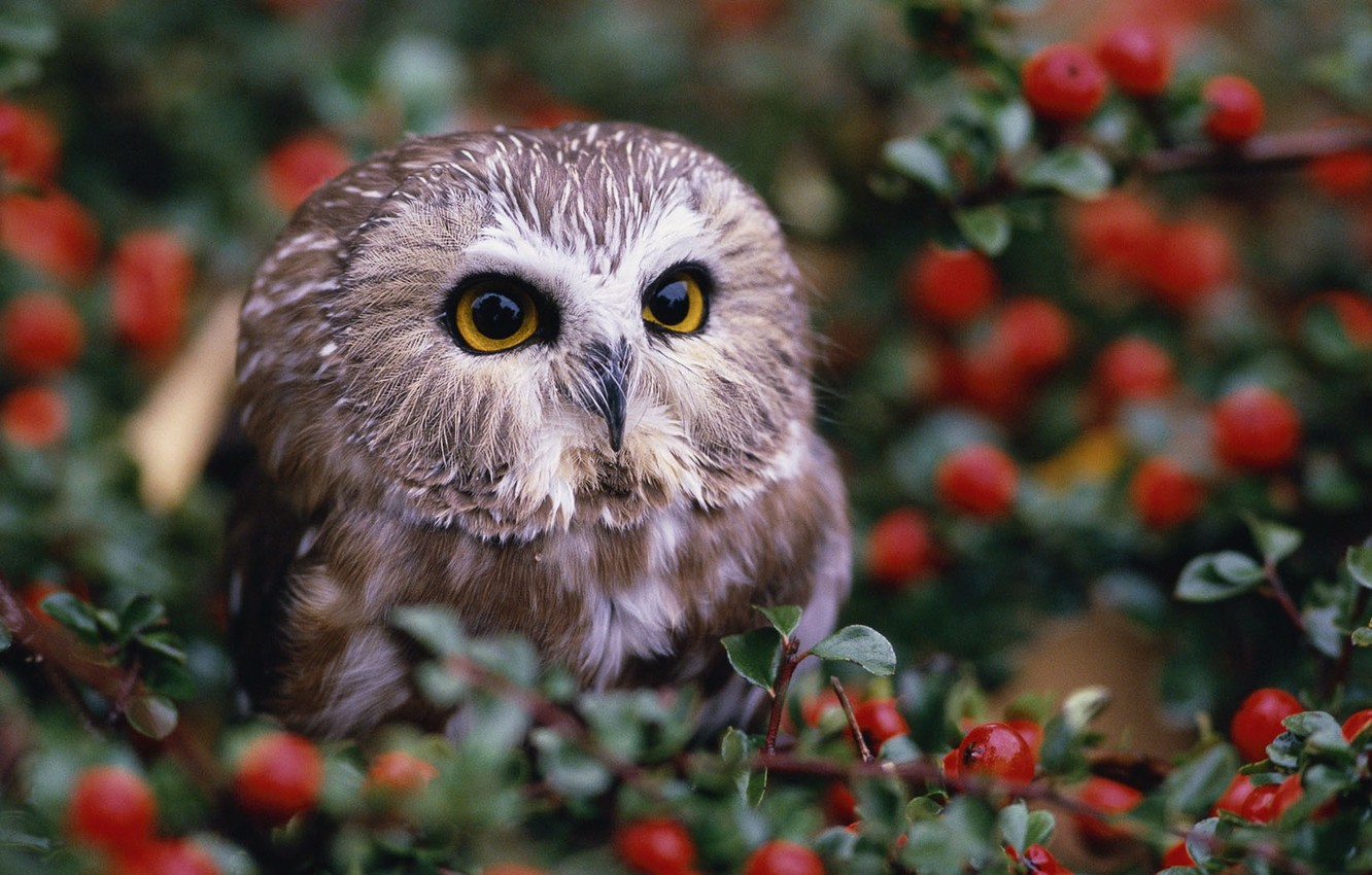 Photo wallpaper berries, owl, the bushes