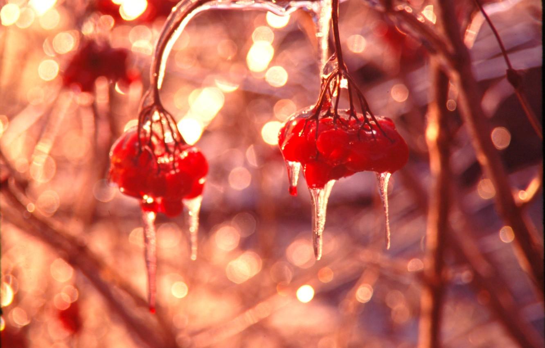 Photo wallpaper ice, winter, macro, glare, berries, Shine, icicles, al, Kalina
