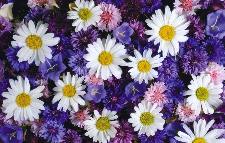 Photo wallpaper chamomile, bells, flower fields, cornflowers