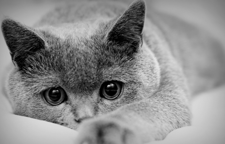 Photo wallpaper cat, mood, black and white photo