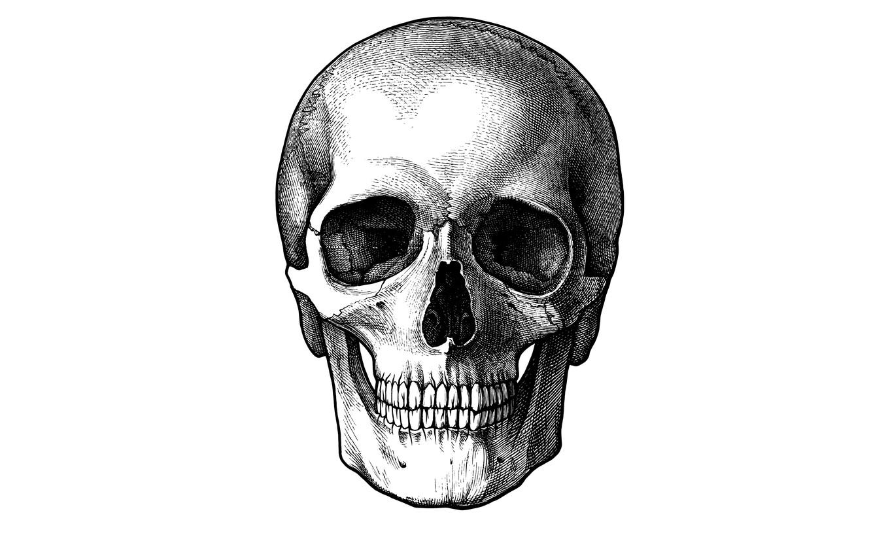 Photo wallpaper skull, minimalism, head, skeleton, white background, sake