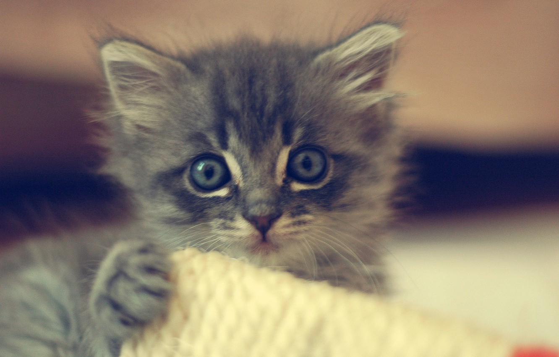 Photo wallpaper cat, kitty, animal, cute, kitten, cat, animal, cute