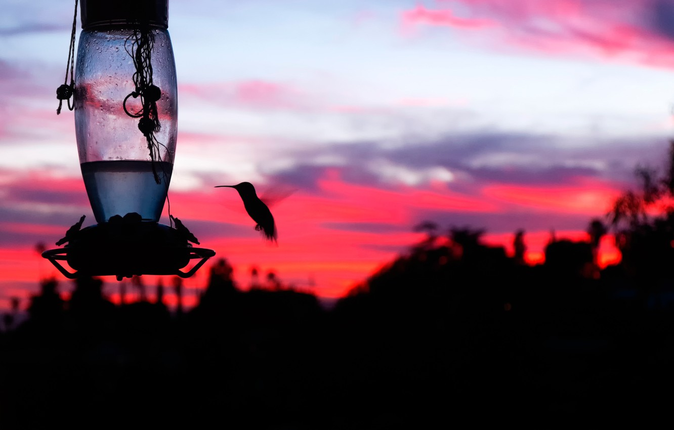 Photo wallpaper sunset, bird, silhouette, al