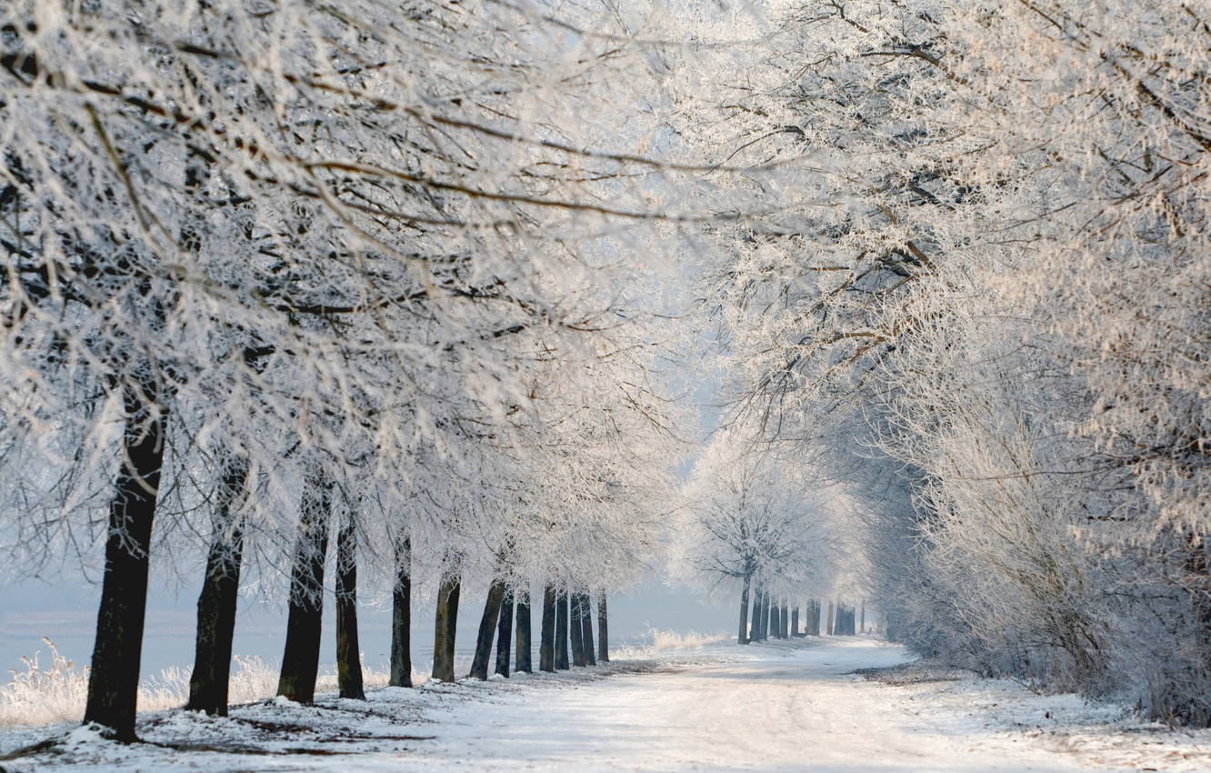 Photo wallpaper winter, snow, trees, landscape, nature