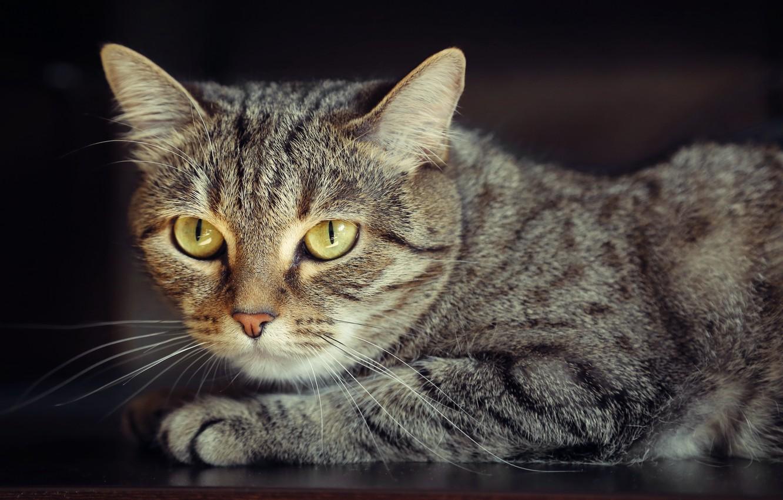 Photo wallpaper cat, Wallpaper, portrait