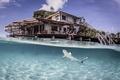 Picture Cross-Ampat, tiger, blue shark, Indonesia, resort, fish, Laguna, water, transparency