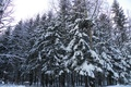 Picture in the snow, tree, in the winter, turn, forest