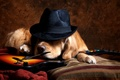 Picture dog, guitar, hat, each