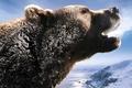 Picture roar, bear, Russia, snow