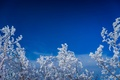 Picture frost, the sky, branches, snow, winter