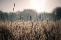 Picture macro, wallpapers, rays, plants, photo, nature, spikelets, blur, bokeh, field, summer, the sun, bokeh