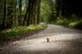 Picture road, walk, Danbo
