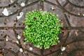 Picture plants, petals, green