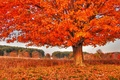 Picture tree, autumn, nature